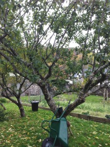 A photo of apple trees at the Letterewe House orchard